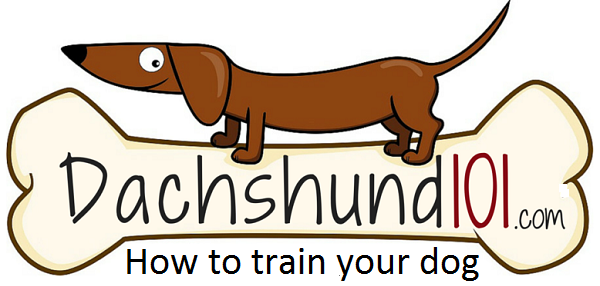 Dachshund Puppy Training