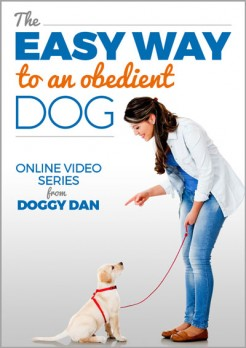 Free Dog Training Video Series