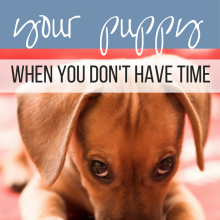 How to House Train Puppy even when you don't have time. House train puppy: Fast and easy at http://Dachshund101.com/how-to-house-train-puppy/