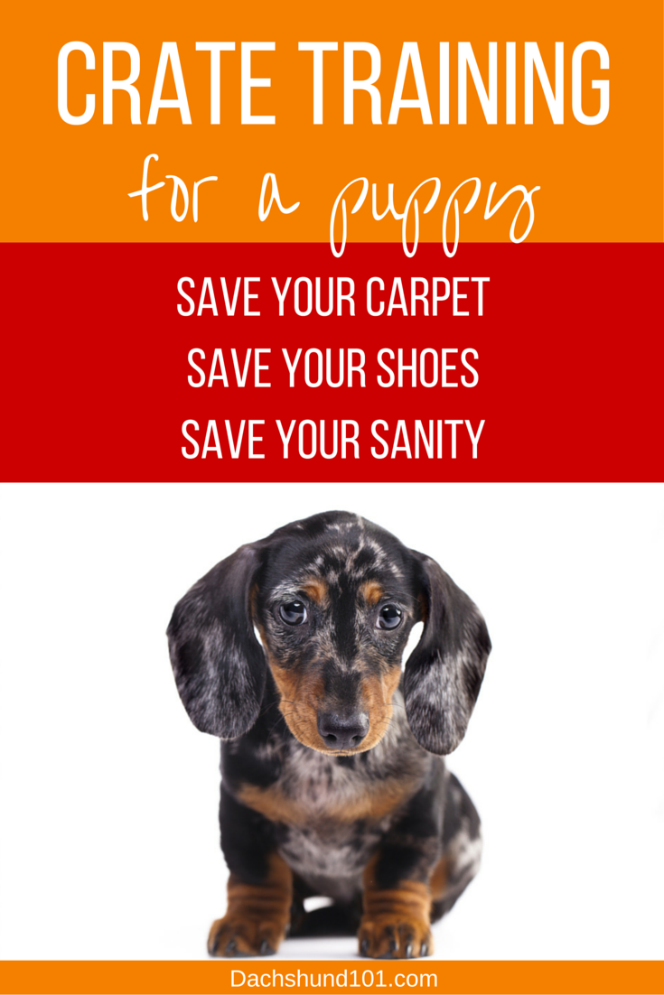 Crate Training for a Puppy :: Crate training puppies doesn't have to be hard! Save your carpet. Save your shoes. Save your sanity! http://Dachshund101.com/crate-training-for-a-puppy/