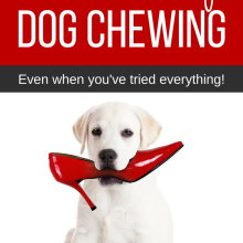 How to Stop a Dog Chewing in 3 easy steps. No more destroyed shoes with these simple
